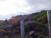 早朝の御浜小屋と神社