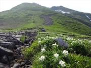山頂への登山道とお花畑