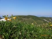 牛ケ岳山頂でニッコウキスゲの背景に巻機山