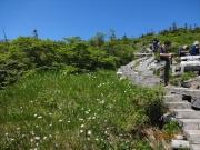 中ノ芝休憩所の周囲に咲くワタスゲ