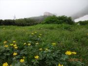 千畳敷駅を背景に咲くシナノキンバイ