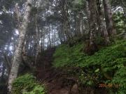 急登の林道はガス気味