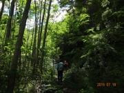 登り始めの樹林帯には木漏れ日が差す