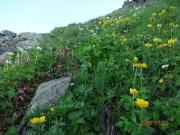 山頂直下のお花畑