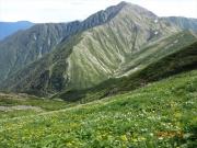 お花畑と赤石岳