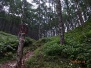 歩きやすい登山道。樹の幹を食害保護