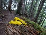 鮮やかな黄色の謎の物体?菌類?