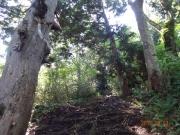 沢を通り、樹の根の多い道を通る