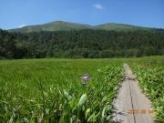 山ノ鼻湿原から至仏山を眺望