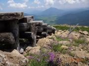 至仏山への木段脇のタカネナデシコと燧岳
