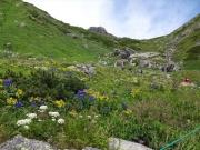 下山時、頂上宿舎直下のお花畑
