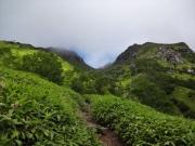 樹林帯を抜けた登山道