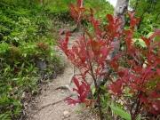 赤い葉と赤い実が鮮やか