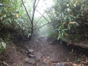 大倉乗越への最後の泥岩ロープ場