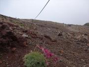 9合目登山道。手前にコマクサ