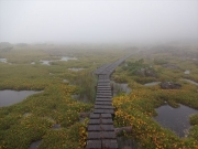 霧雨の中の雲ノ平の湿原
