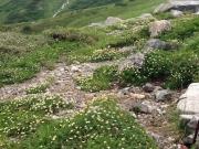 登山道脇のお花畑