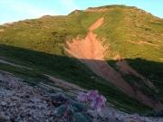三ツ岳を背景に咲くコマクサ