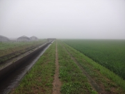 霧に煙る田んぼ道を歩く