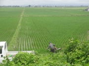 自転車の様な機械で田んぼの水はけ作業をするおじさん