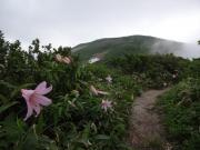 ヒメサユリの咲く縦走路
