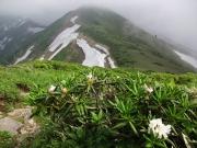 シャクナゲの咲く縦走路
