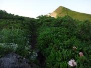 ヒナウスユキソウとシャクナゲの道を通り竜門山へ