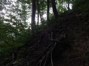 急な登り道が続く