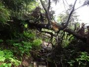 進む道を阻もうとする倒木