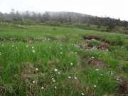 ワタスゲ畑の向こうに西吾妻山頂