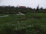 ワタスゲ畑の向こうに西吾妻小屋