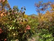 紅葉し始めた登山道から高田大岳を眺望