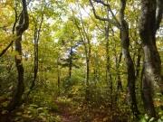 樹林帯に入り雪の影響も収まる