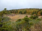 樹林帯を抜けて現れた湿地紅葉