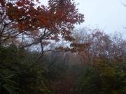 霧と紅葉の樹林帯を進む