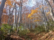 紅葉最終盤の登山道
