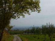 リンゴ畑と弘前市街地眺望