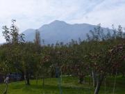 リンゴ畑と岩木山