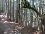 本来の熊野古道散策路