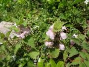 登山道中で見かけた花達