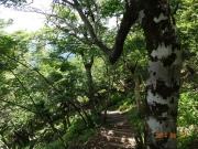 急傾斜の下山道