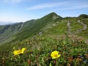 七ッ沼から山頂への道端の花
