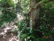 登山道途中の意味不明の札