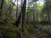 最初は苔むす登山道