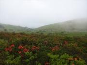 ツツジの咲く草原