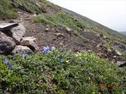 厳しい高山環境で命をつなぐ植物