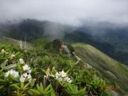 シャクナゲの咲く下山道